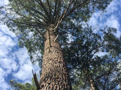 Le Parc naturel régional Médoc a un an