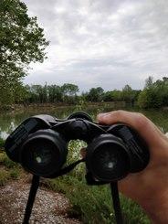 Observez les oiseaux en pleine nature !
