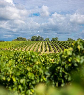 Les fameux vins de Bordeaux