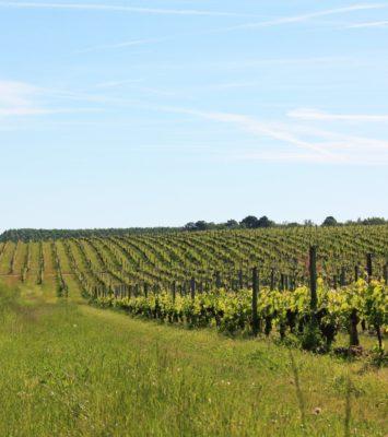 Châteaux viticoles dans le Médoc