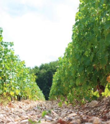 Domaines viticoles AOC Moulis-en-Médoc