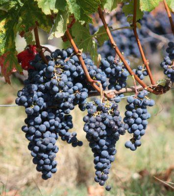 Domaines viticoles AOC Listrac-Médoc