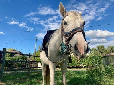 Une randonnée cheval et vin à une heure de Bordeaux