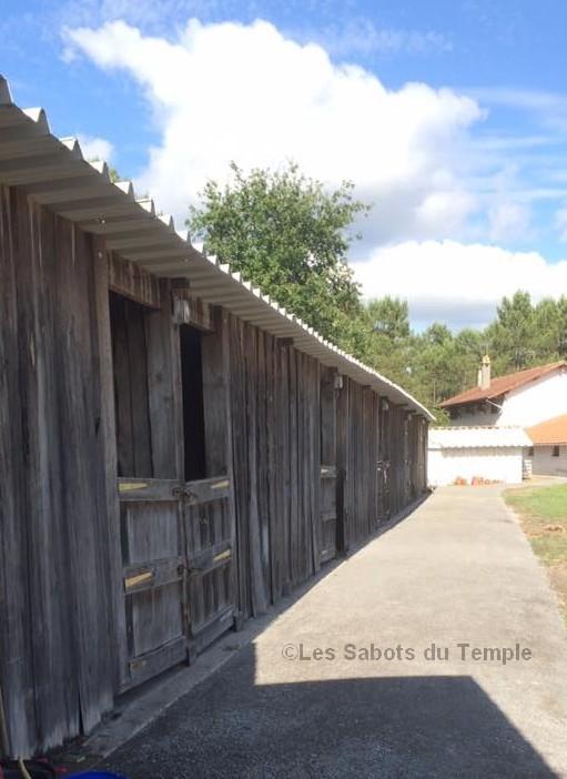LES SABOTS DU TEMPLE   (3)