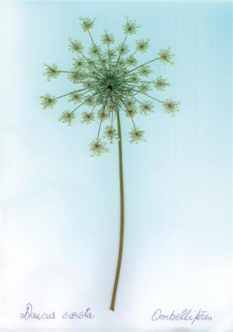 Le Porge – Flora Atlantica